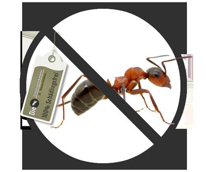 Banner des Schädlings Ameise