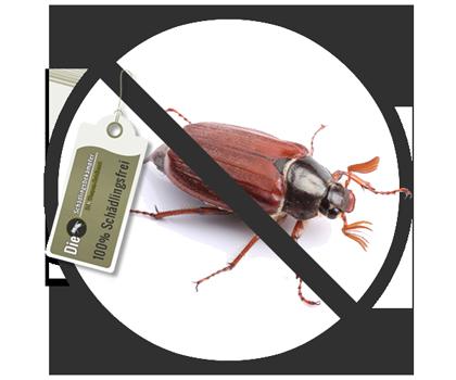 Banner des Schädlings Käfer
