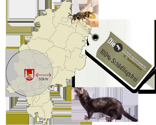 Banner des Standorts Königstein