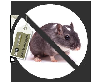 Banner des Schädlings Maus
